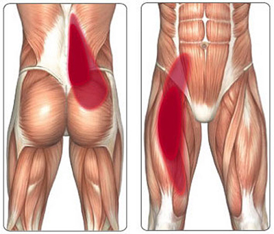 sports injury to the hips and groan images showing Pain distribution pattern psoas tendon problems.